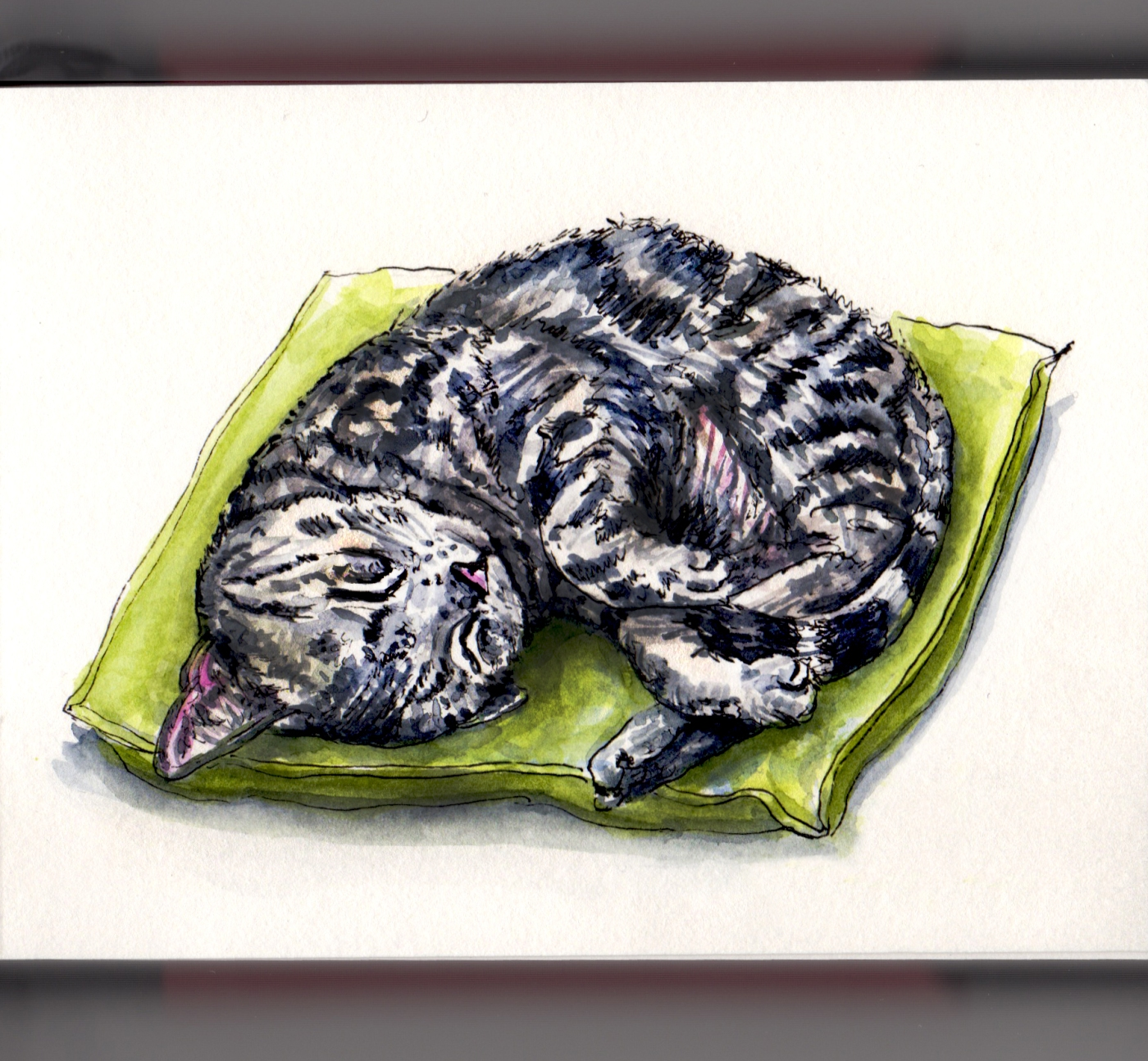 Day 19 - #WorldWatercolorGroup Sleeping In Cat Sleeping on a Tiny Green Pillow