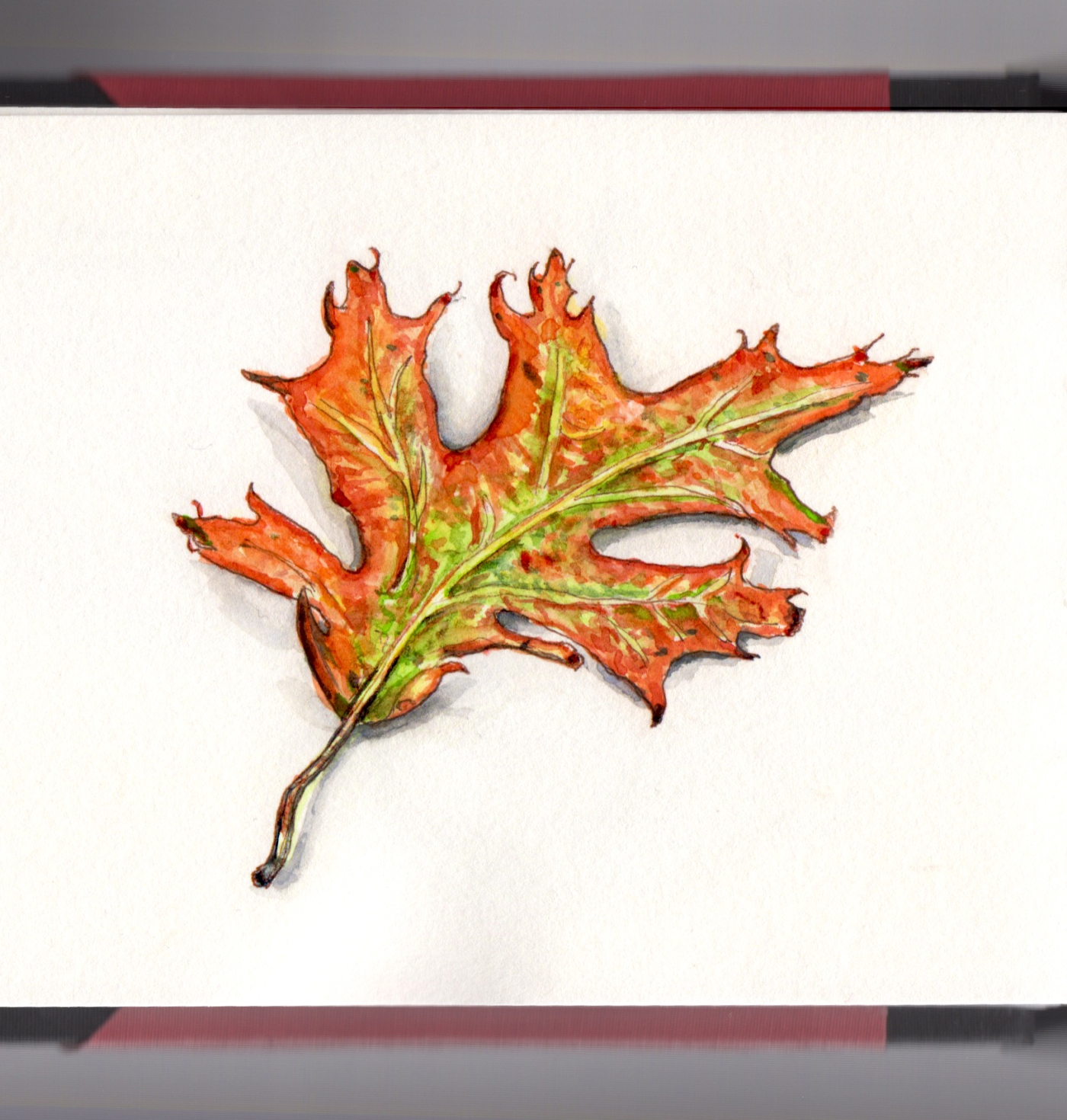 Day 22 - #WorldWatercolorGroup Autumn Leaves Leaf orange red and green for fall