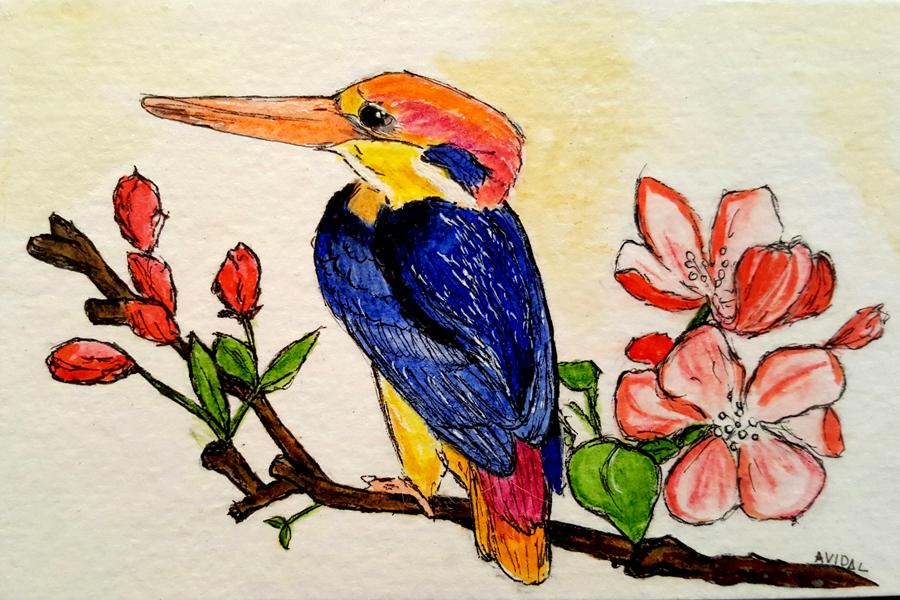#WorldWatercolorGroup - Watercolor - Dwarf Kingfisher by Adriana Vidal - #doodlewash