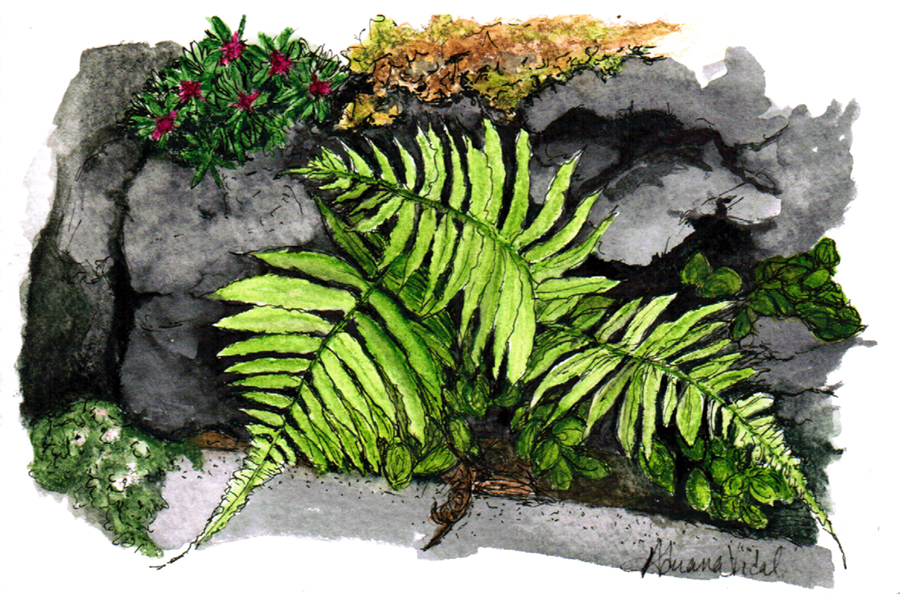 #WorldWatercolorGroup - Watercolor of Ferns from the Ke'anae Arboretum, Maui by Adriana Vidal - #doodlewash