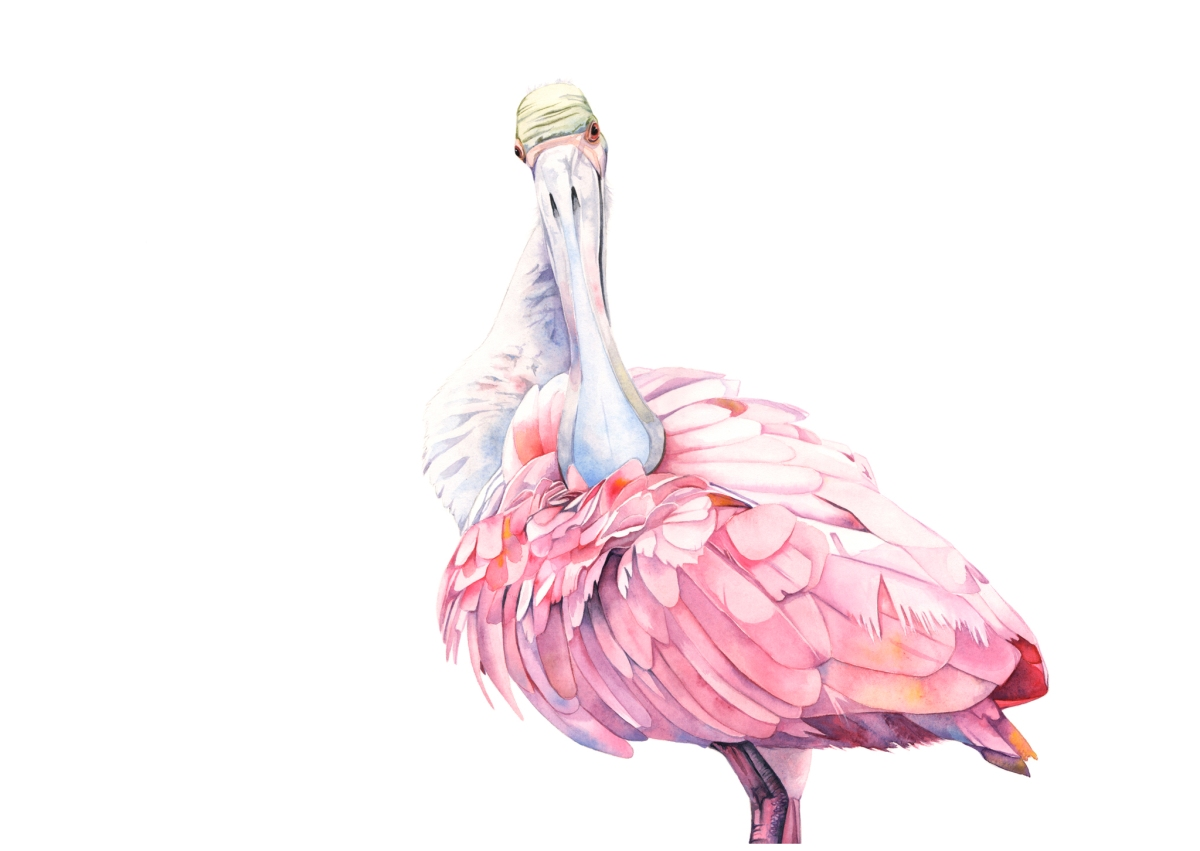 #WorldWatercolorGroup - Watercolor painting of spoonbill by Louise De Masi - #doodlewash