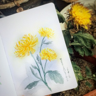 #WorldWatercolorGroup - Watercolor by Maggie Sumitro - Yellow Chrysanthemum - #doodlewash