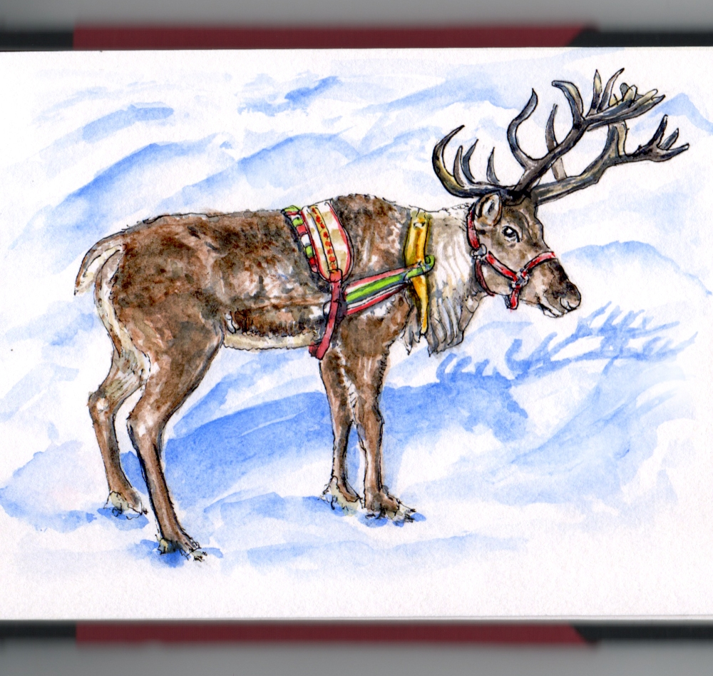 #Day 22 How Do Reindeer Fly? Santa's Reindeer in snow on white background real