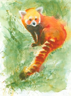 #WorldWatercolorGroup - Watercolor painting by Angela Casey of Red Panda - #doodlewash