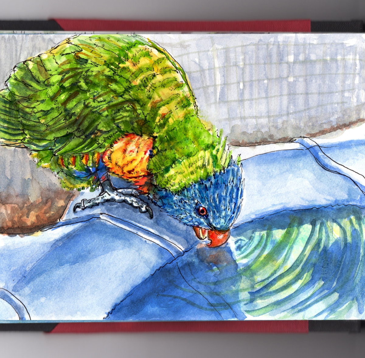 Day 13 - #WorldWatercolorGroup Rainbow Lorikeet Quick Sketch - #doodlewash