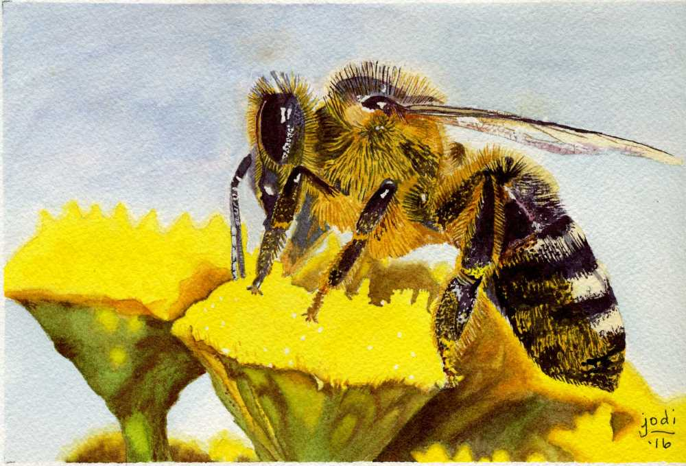 #WorldWatercolorGroup - Watercolor painting by Jodi Sones of bee - #doodlewash