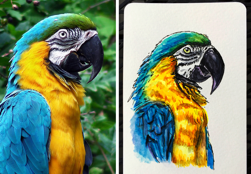 Painting From Photo References - Blue Yellow Macaw Watercolor Sketch Painting