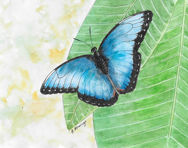 #WorldWatercolorGroup - Watercolor by Heather Musingo of butterfly - #doodlewash