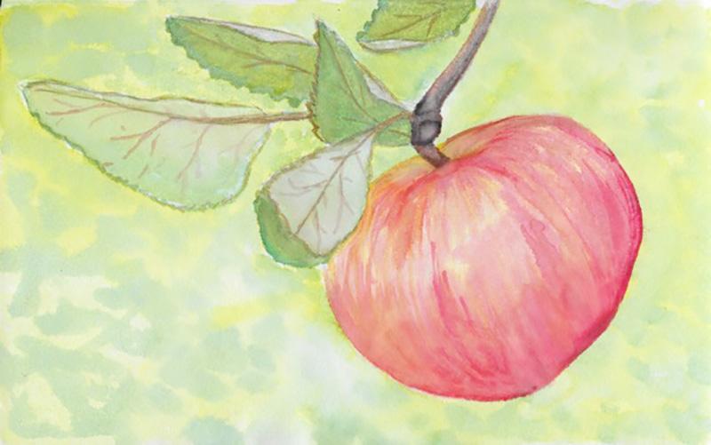 #WorldWatercolorGroup - Watercolor by Heather Musingo of apple - #doodlewash