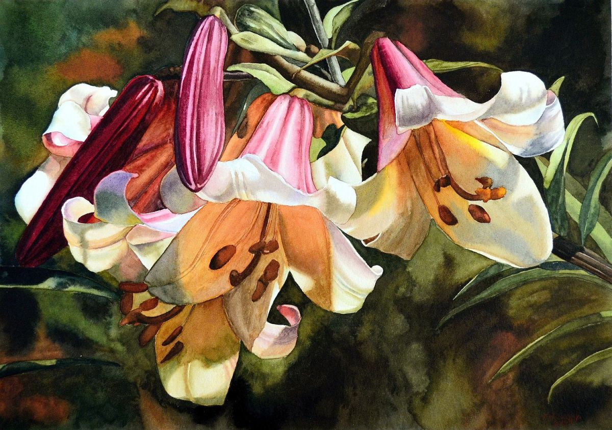 #WorldWatercolorGroup - Watercolor by Krzysztof Kowalski - Lilium Ragale - #doodlewash