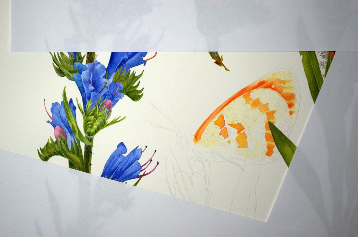 #WorldWatercolorGroup - Watercolor by Krzysztof Kowalski - Melitaea Didyma 01 - #doodlewash