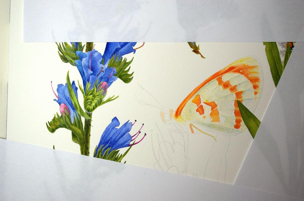 #WorldWatercolorGroup - Watercolor by Krzysztof Kowalski - Melitaea Didyma 02 - #doodlewash